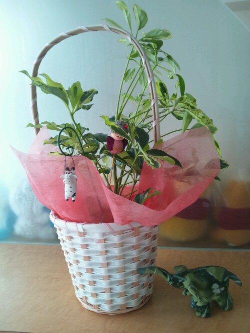 観葉植物☆